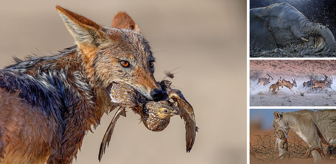 Johan Botha Wildlife photography my way Must Myths and Tips