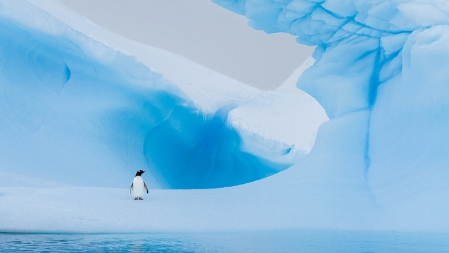 All alone on an iceberg