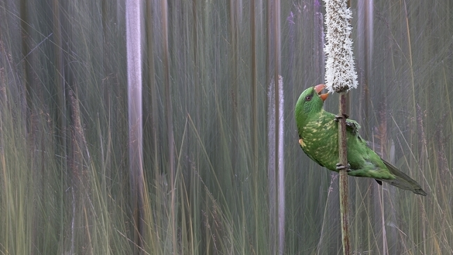 Parrot In The Grass Tree